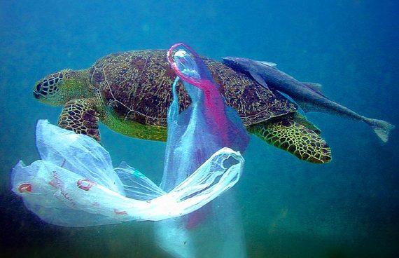 Pollution : vers la fin des plastiques à usage unique