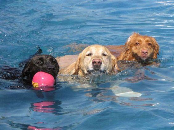 Barcelone et la 1ère plage pour chiens