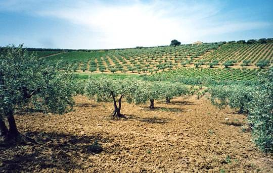 Ardèche : 1ères restrictions d'eau