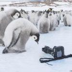 Antarctica lyon 31 12 16