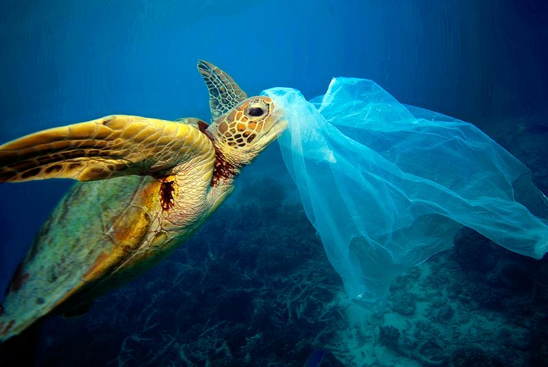 La vague de plastiques va monter jusqu'où ?