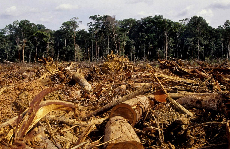 Déforestation : des chiffres tristement records pour l'Amazonie