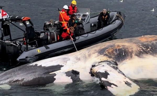 Baleines noires 03 07 17