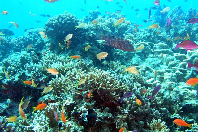 Sanctuaires naturels : protéger la Grande Barrière de corail en Australie