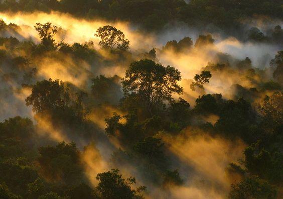 Climat : la déforestation au Brésil bat des records