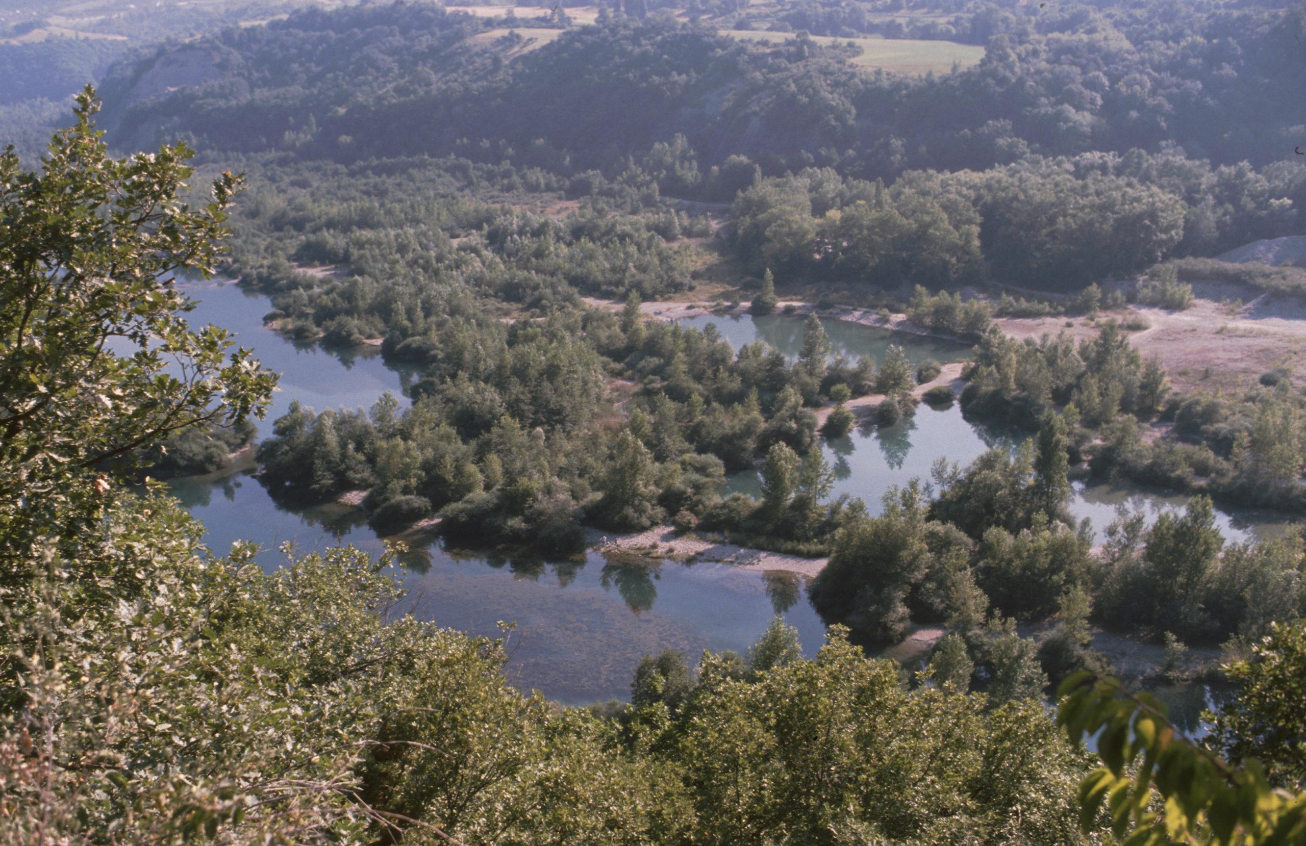 Mieux connaître les arbres qui bordent les cours d'eau