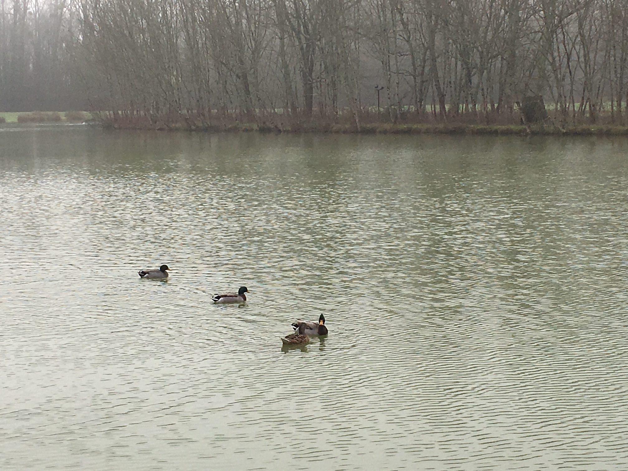 La Garonne et les poissons migrateurs
